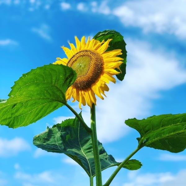 夏の花と言ったらサムネイル